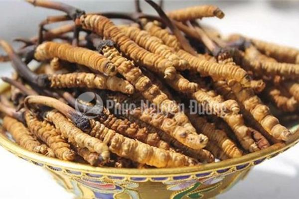 Đông trùng hạ thảo Việt Nam