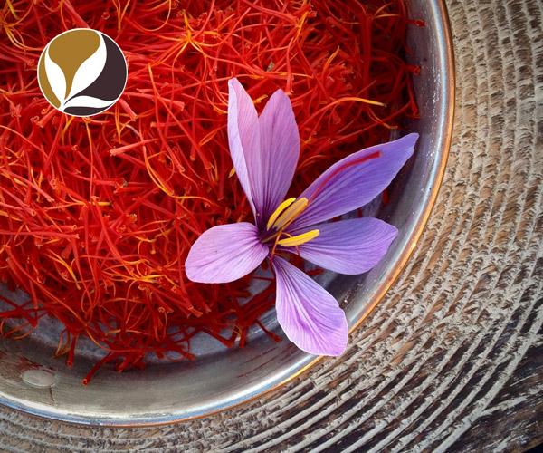 Hồng hoa Tây Tạng