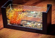 Hình ảnh minh họa bể cá mini