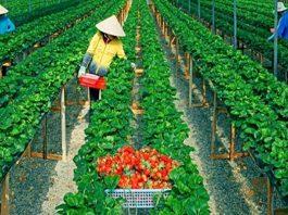 Kinh nghiệm kinh doanh ít vốn ở nông thôn đạt hiệu quả cao